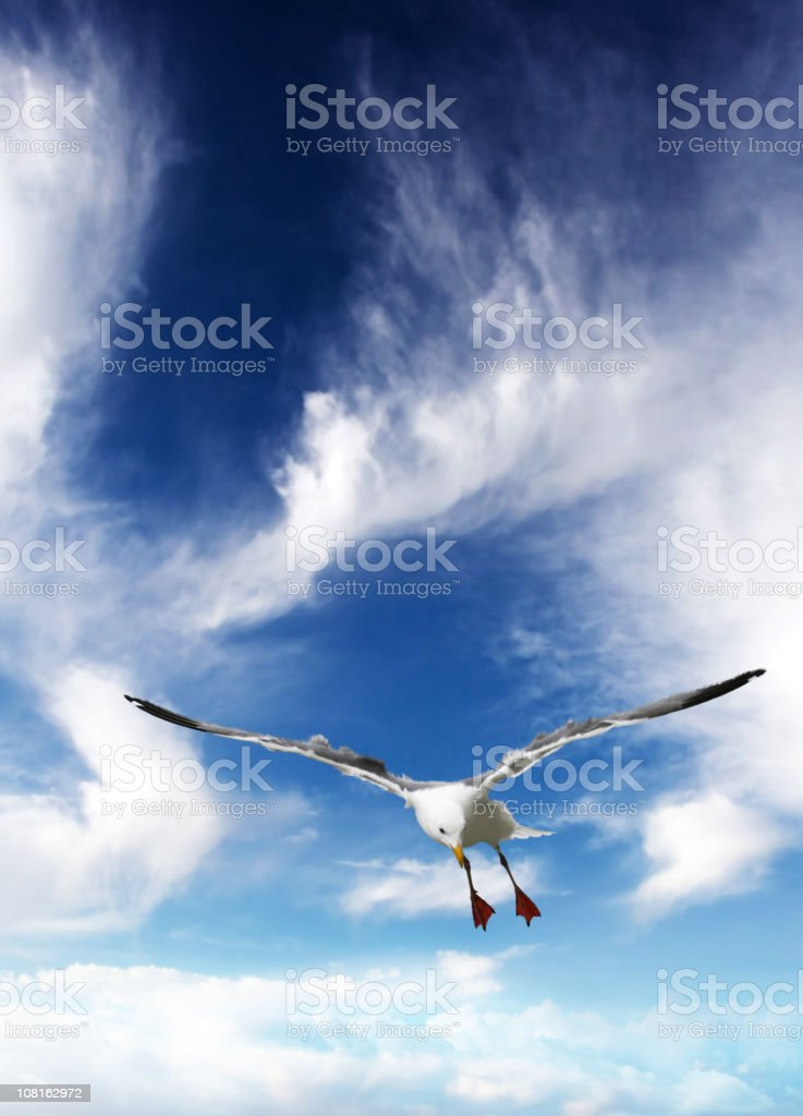 Bird Flying in Sky royalty-free stock photo