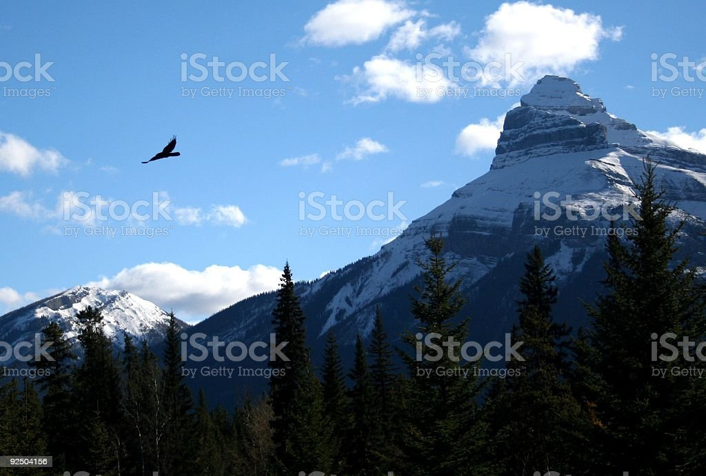 Bird Flying in the Mountains royalty-free stock photo
