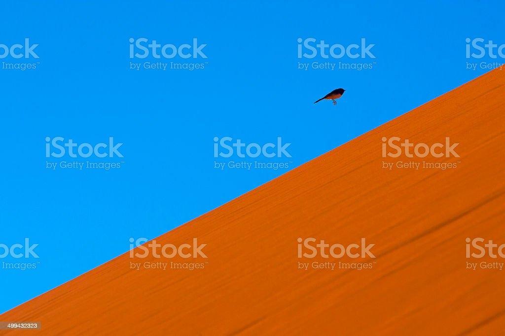 Bird flying on a Simpson Desert Dune, South Australia, Australia stock photo