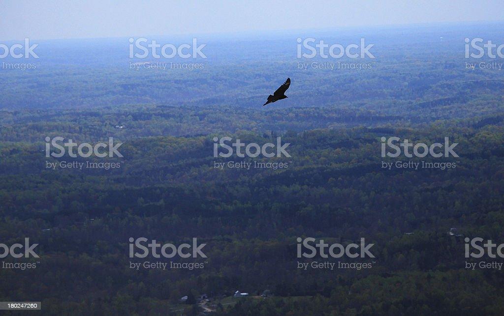 Bird Flying Over the Blue Ridge royalty-free stock photo