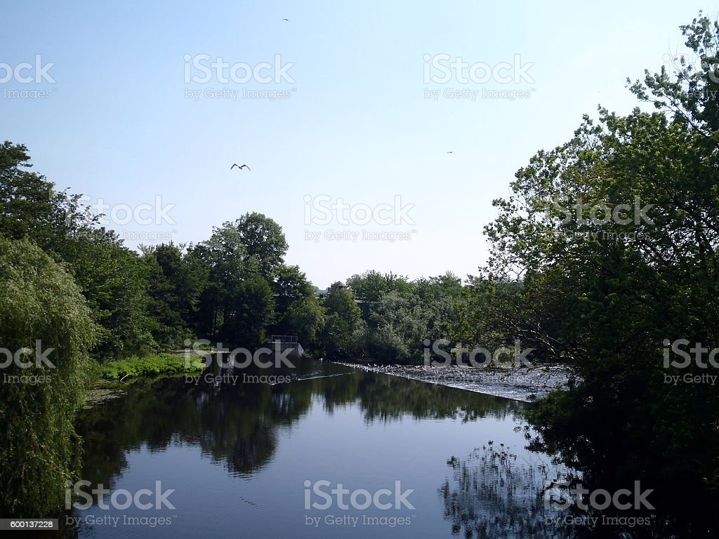 Bird flying over the Charles River stock photo
