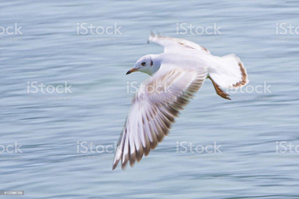 Bird flying over water stock photo