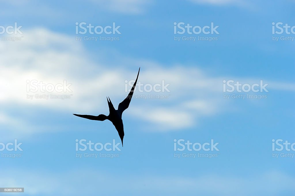 Bird Flying Silhouette Isolated stock photo