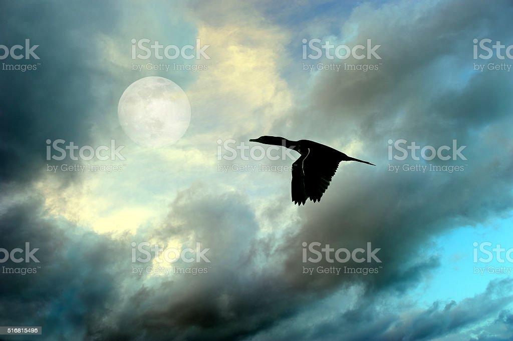 Bird Flying Silhouette stock photo