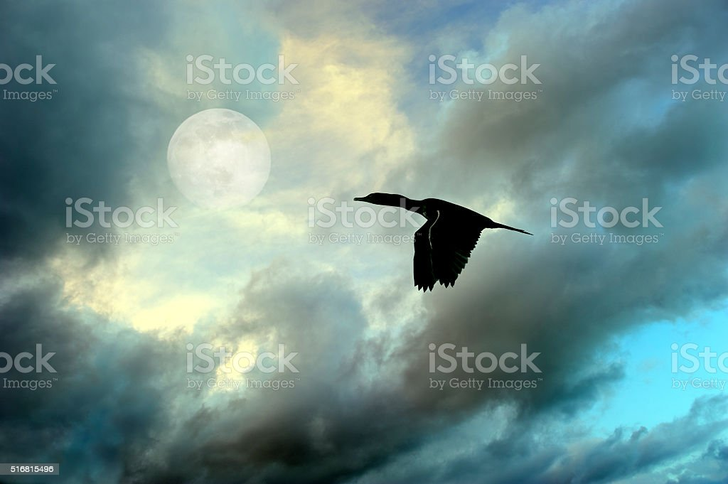 Bird Flying Silhouette stock photo