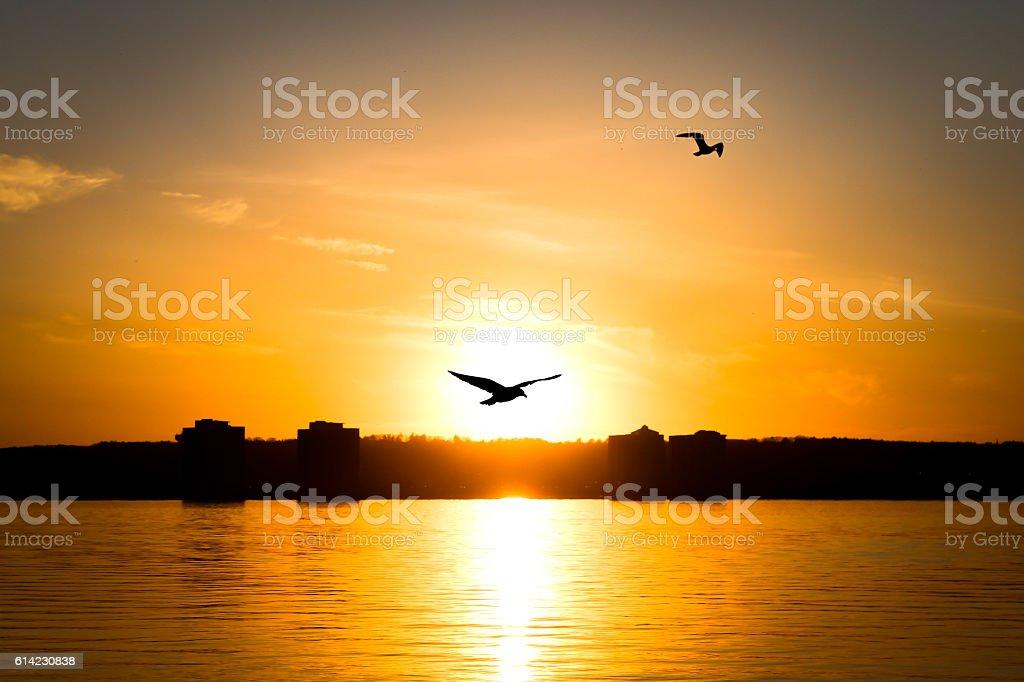 Bird flying through a setting Sun. stock photo