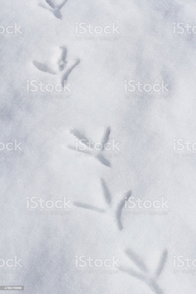 Bird Footprint stock photo