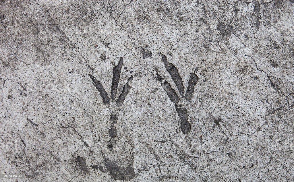 Bird footprints hardened on the concrete surface stock photo