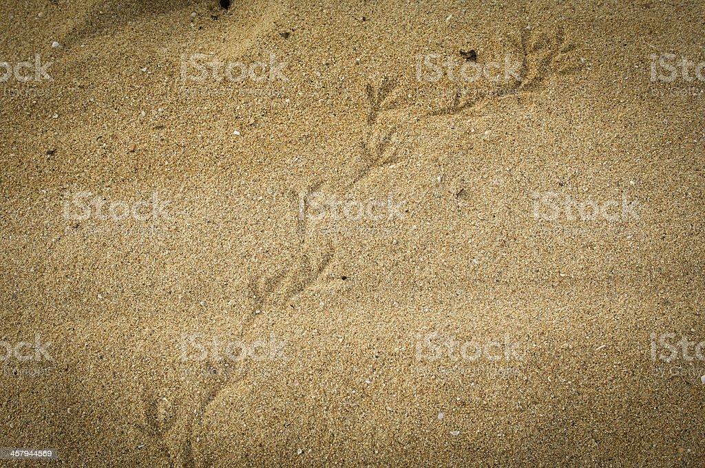 Bird  footprints in the beach stock photo