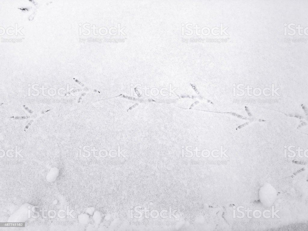 Bird footprints on the snow. stock photo
