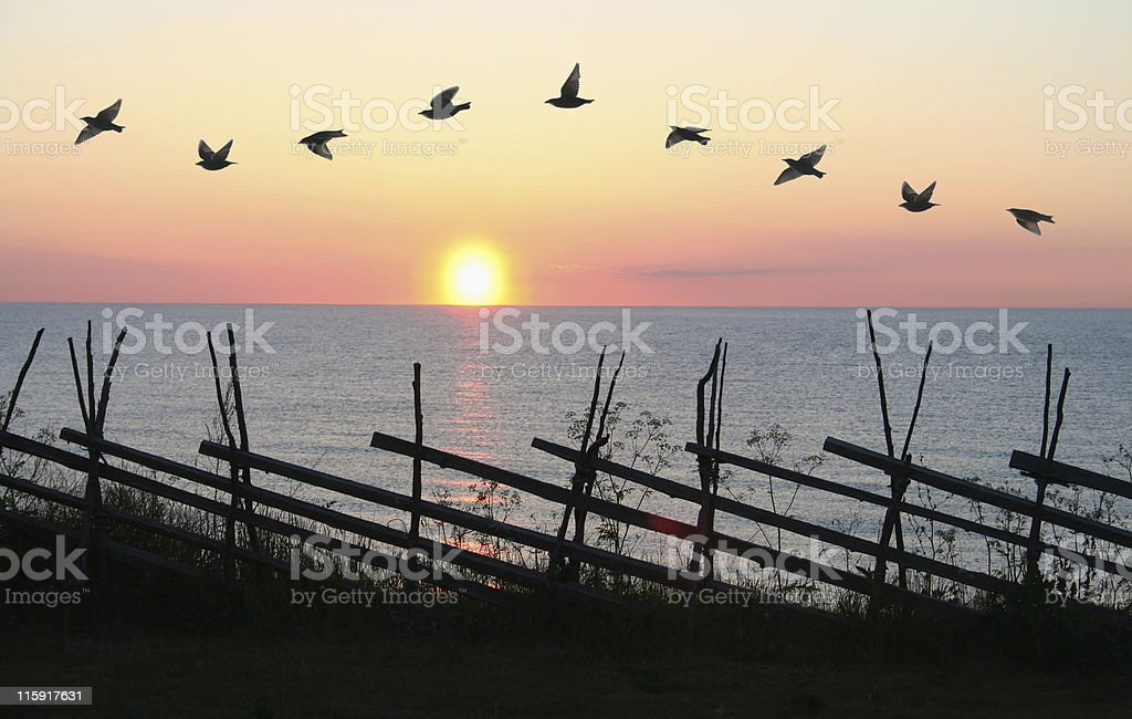 Bird Formation stock photo