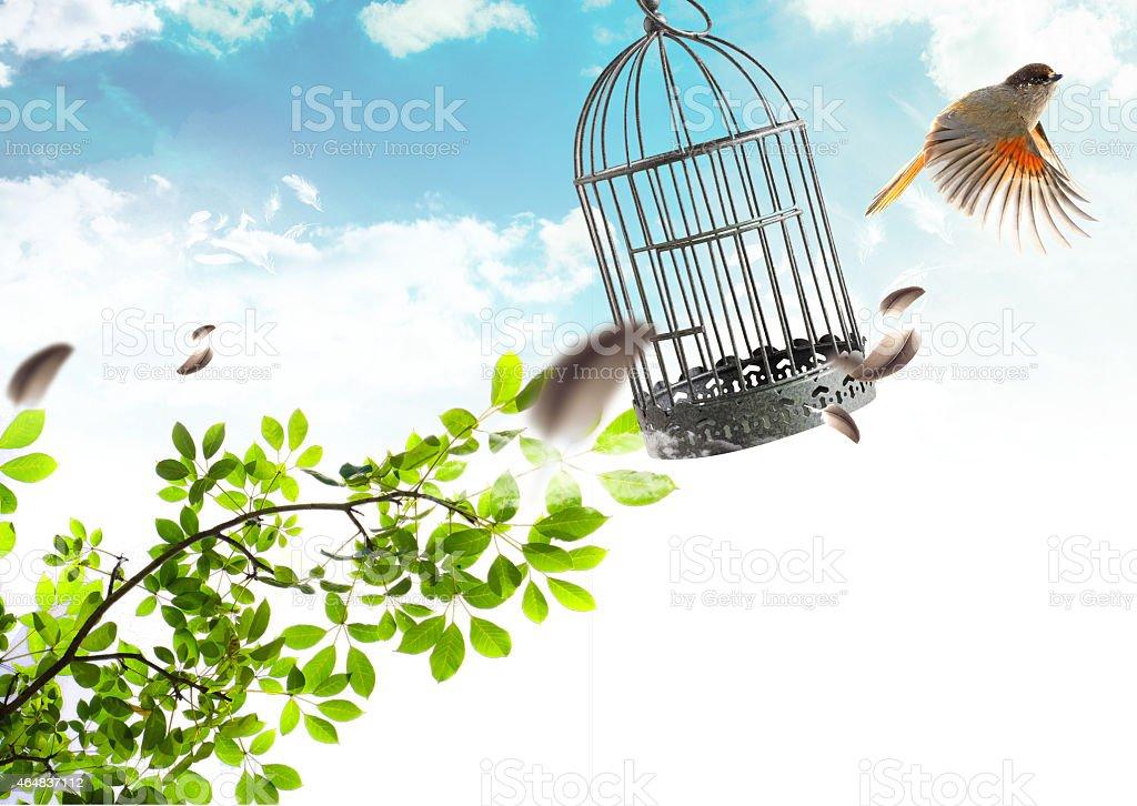 Bird free stock photo