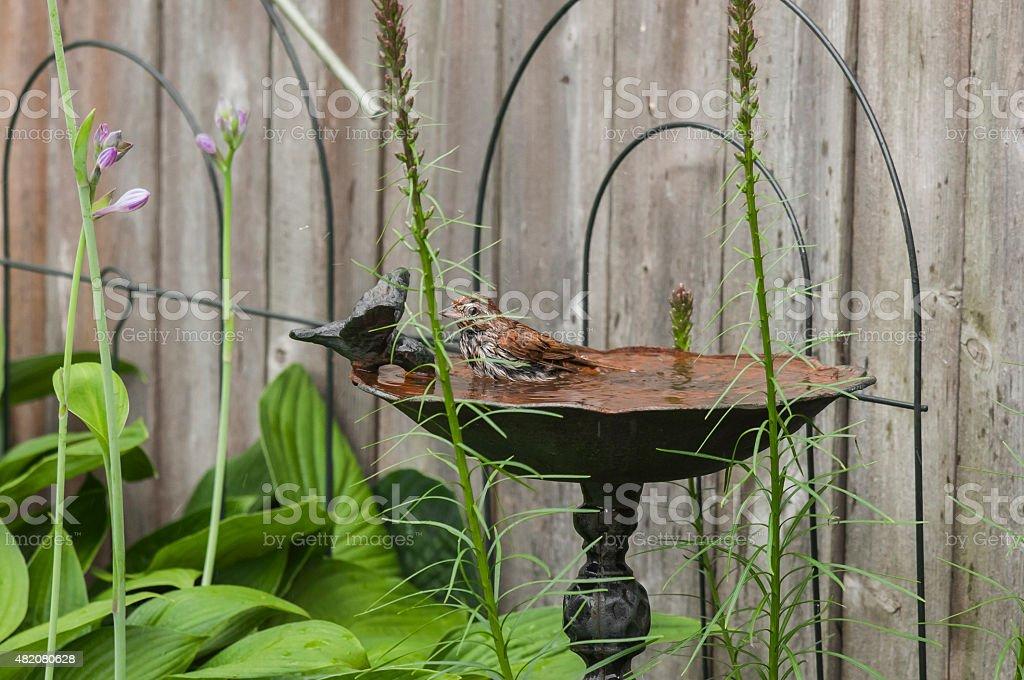 Pássaro fica um banheiro foto royalty-free