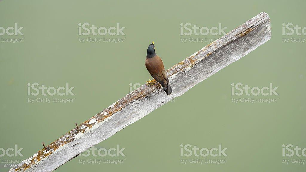 Bird held on the old wood stock photo