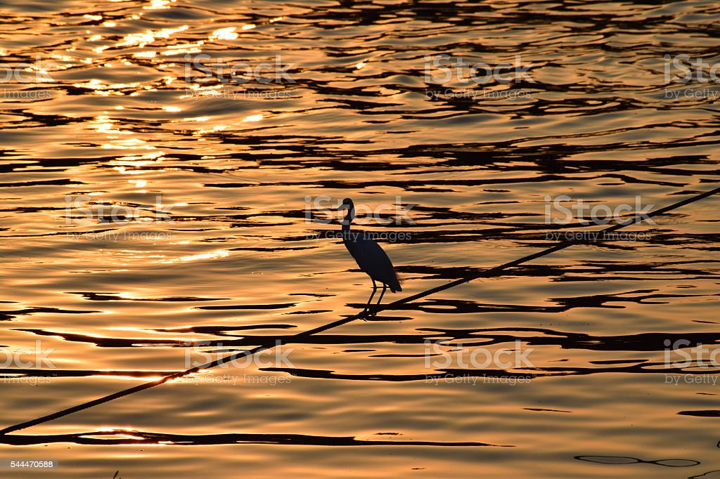 Bird heron on a wire in the sunset stock photo