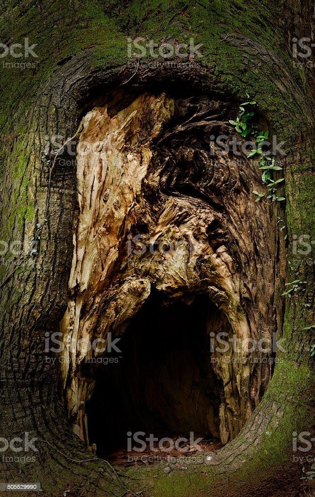 Bird hole in the tree stock photo