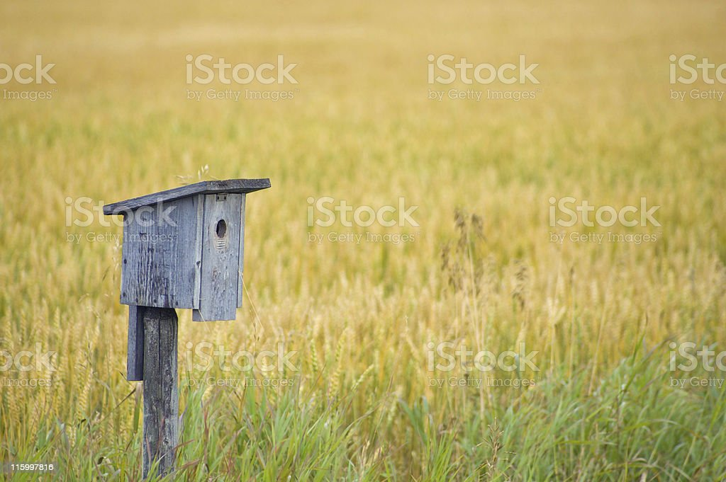 Bird House in Grain Field royalty-free stock photo