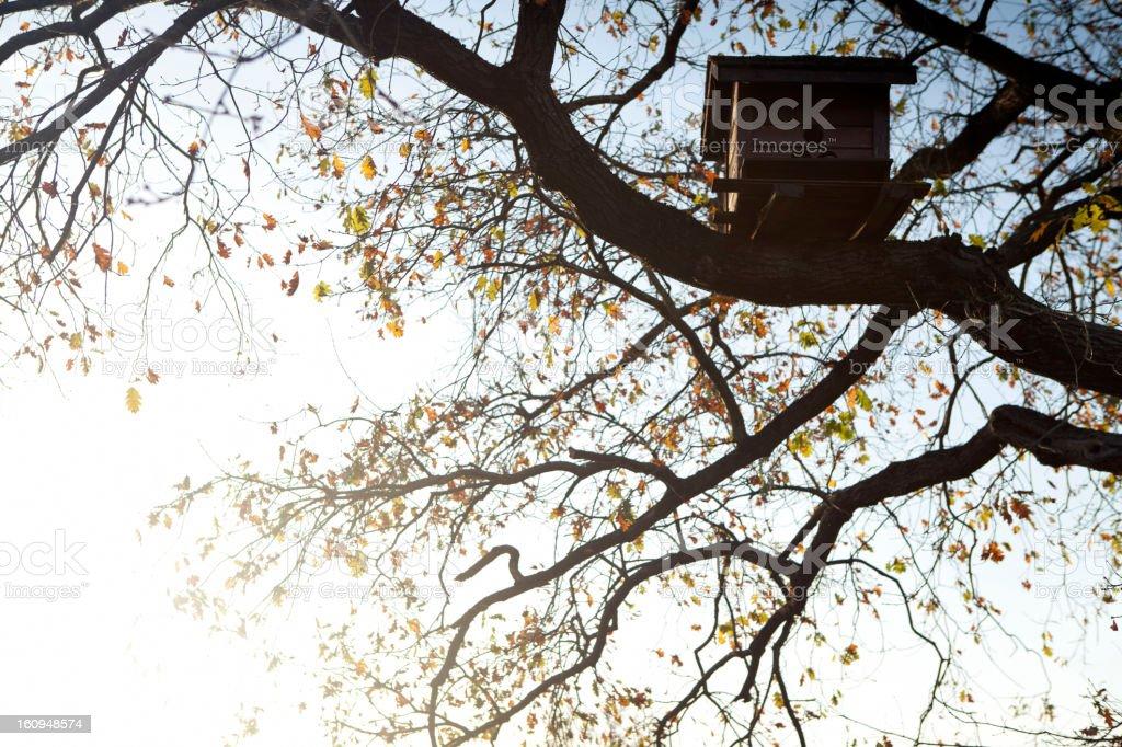 bird house on a tree royalty-free stock photo