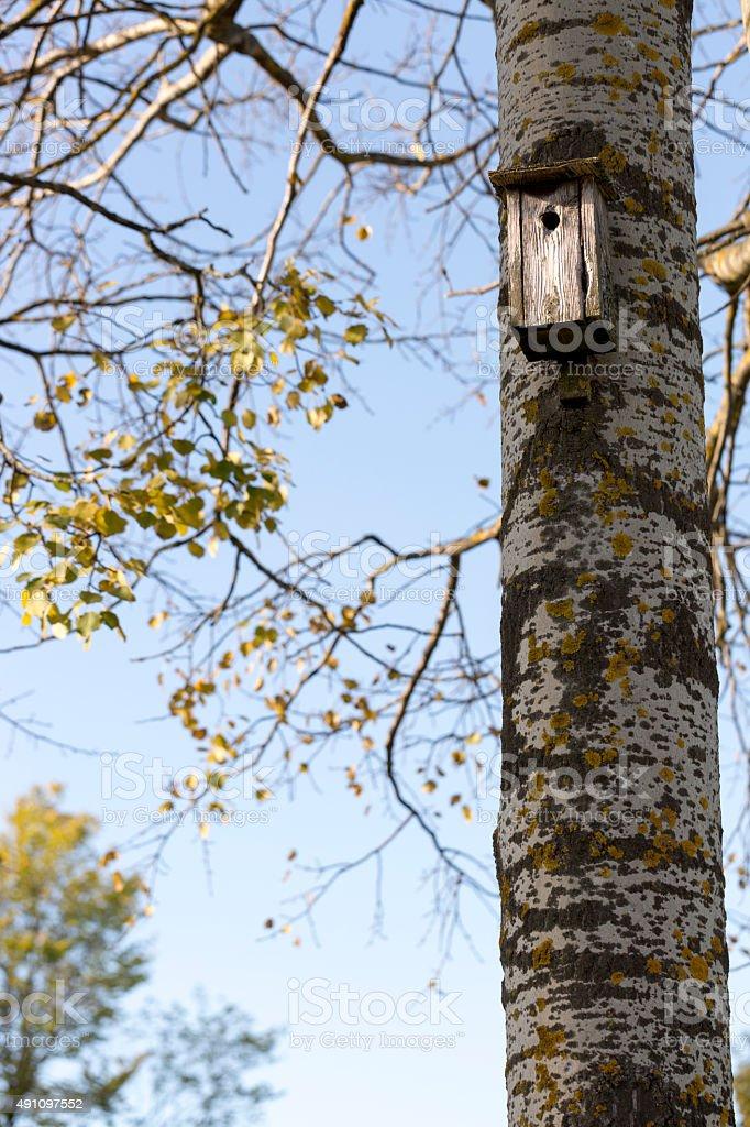 Bird House on Birch Tree stock photo