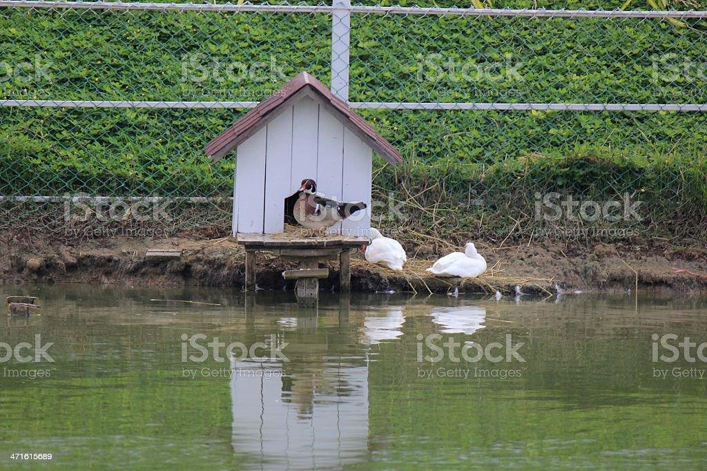 Bird house. royalty-free stock photo
