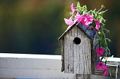 Bird house with pink petunias sitting on top
