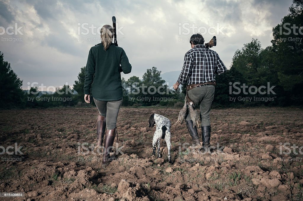Bird hunting in plowed field stock photo