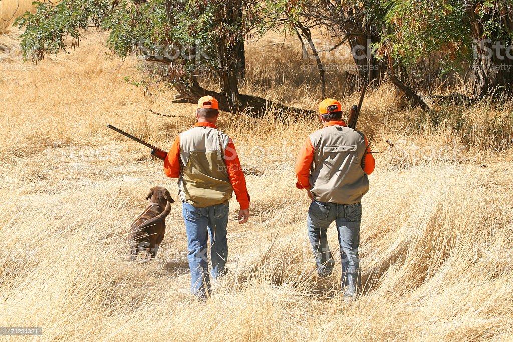 Bird Hunting stock photo