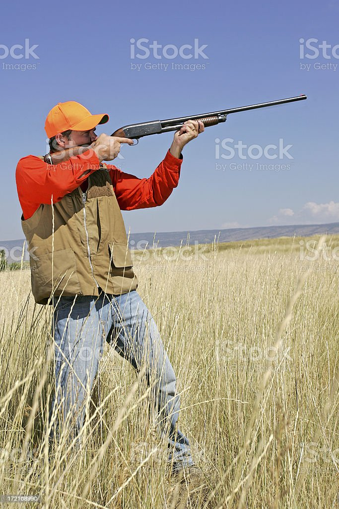 Bird Hunting Series royalty-free stock photo
