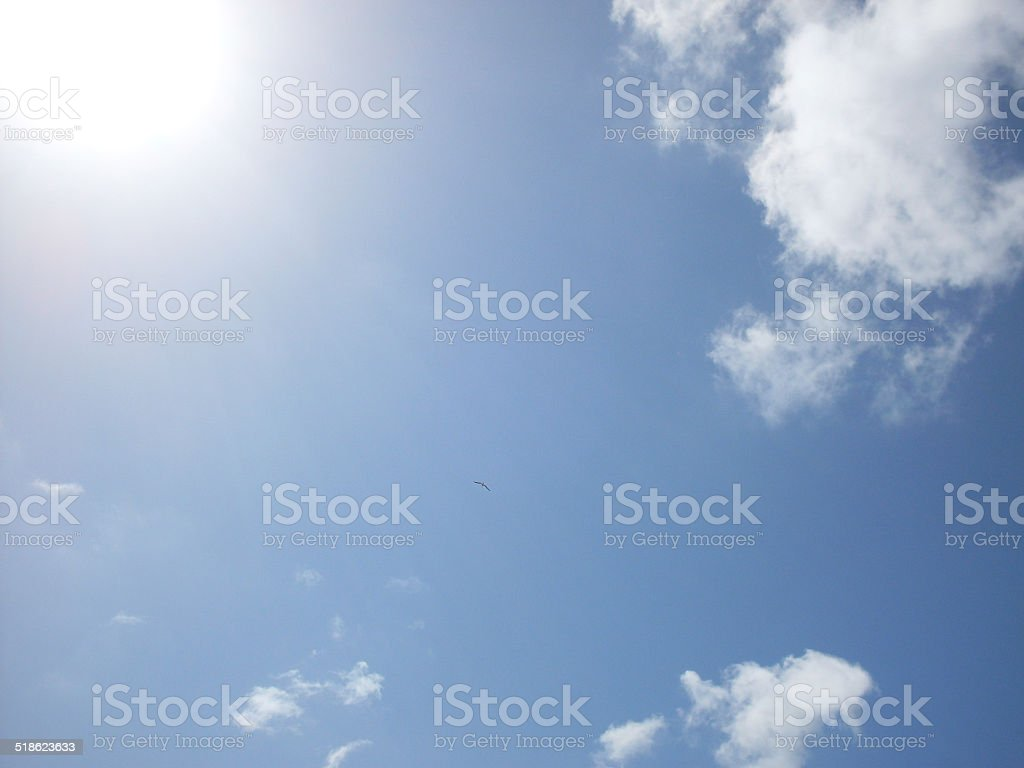 Bird in a blue sky with white clouds royalty-free stock photo