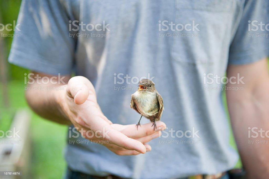 Bird in a mans hand stock photo