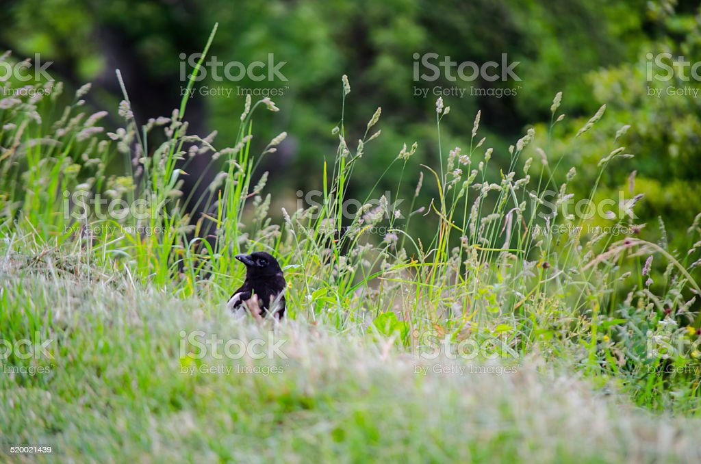 Bird in a park stock photo