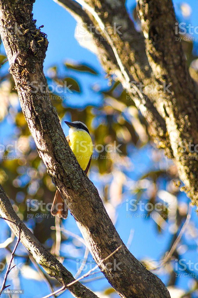 Bird in a tree stock photo