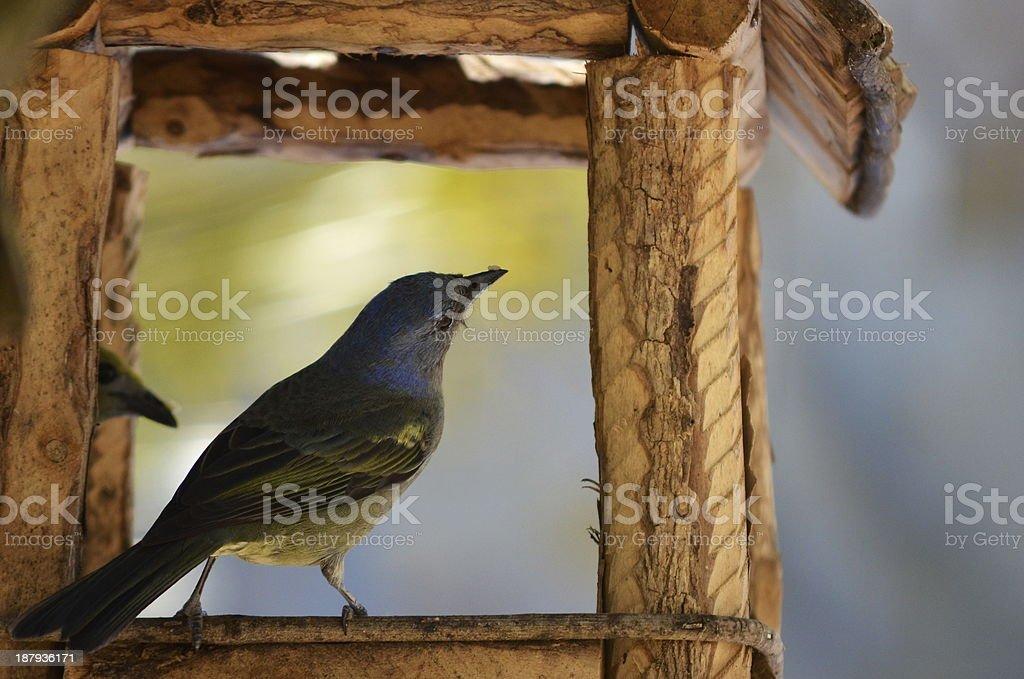 Vogel aus dem Haus genießen Sie erholsame Momente Lizenzfreies stock-foto