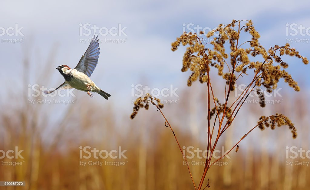 Bird in flight against bright autumn background stock photo