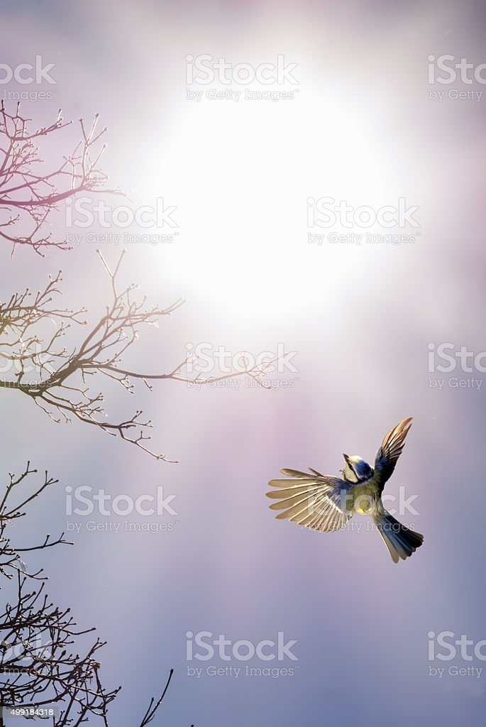 Bird in flight against bright sky stock photo