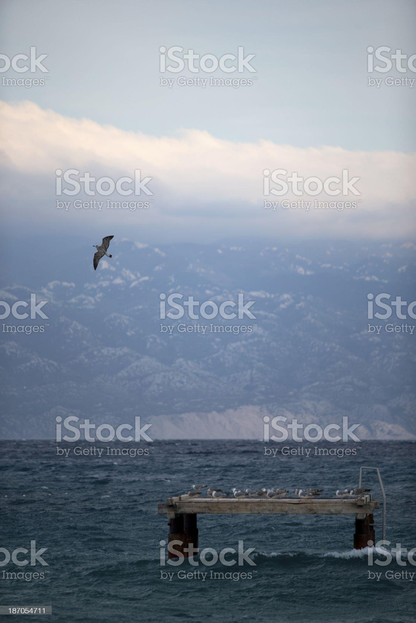 Bird in flight royalty-free stock photo