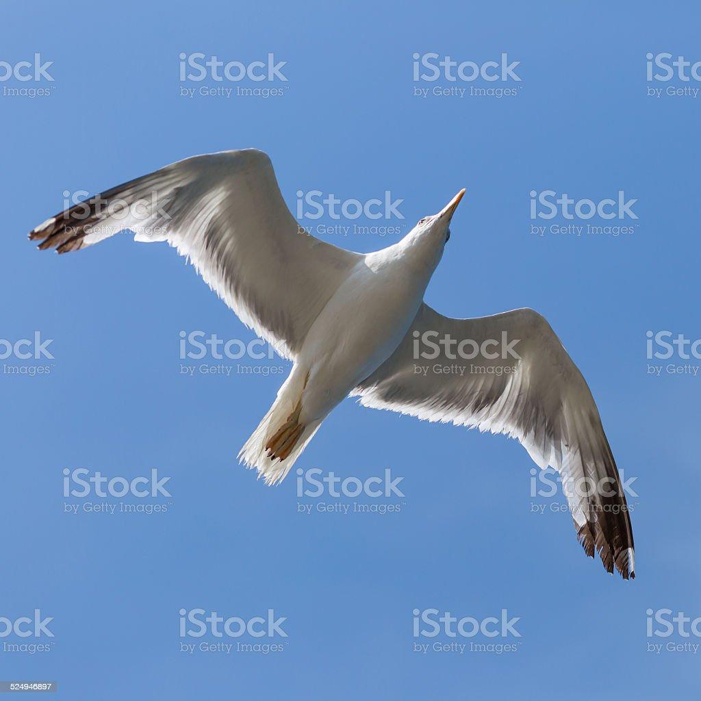 Bird In Flight stock photo