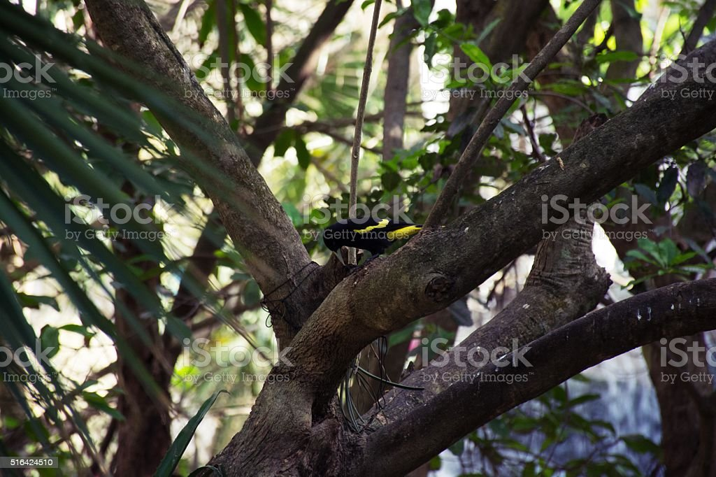 Bird in forest. stock photo