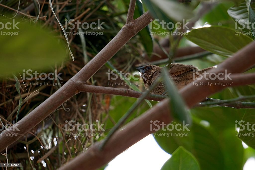 Bird in front of net royalty-free stock photo