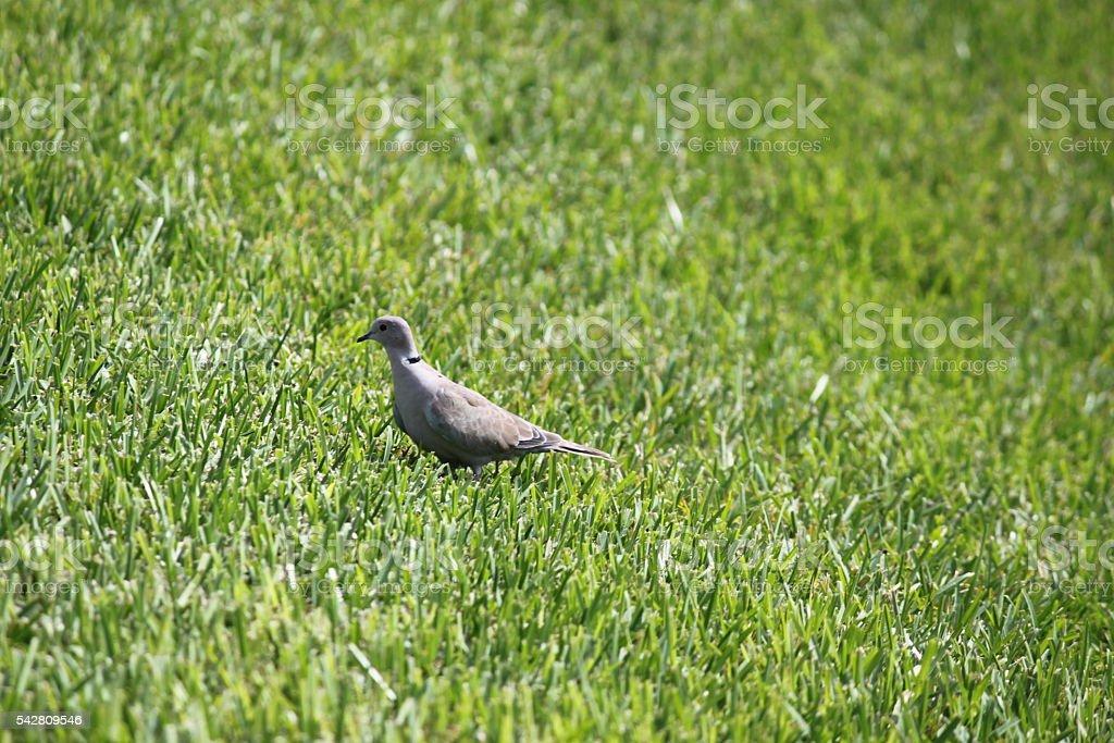 Bird in Grass stock photo