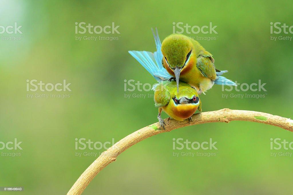 bird in love stock photo
