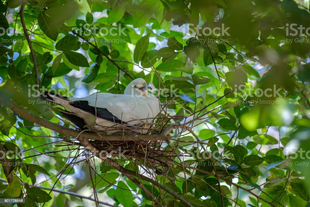The white bird sitting in nest on a branch in forest.