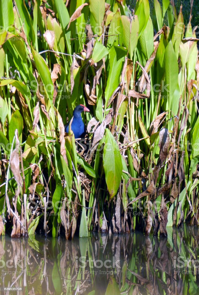 Bird in reeds by river stock photo