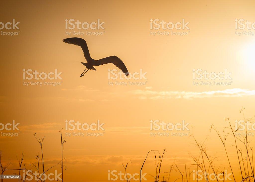 bird in silhouette stock photo