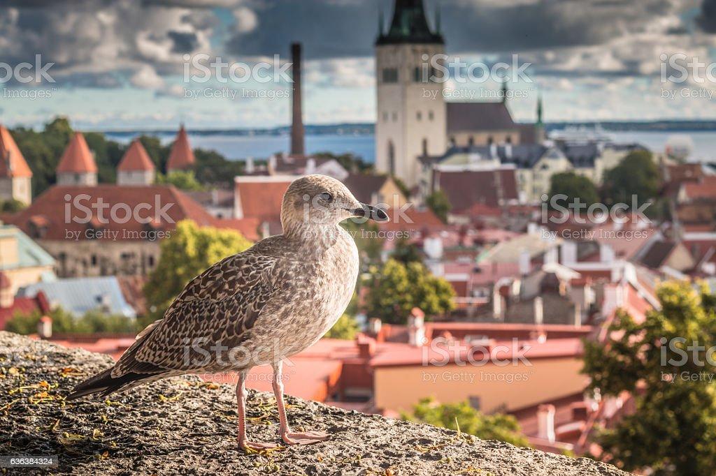 Bird in Tallinn Estonia stock photo