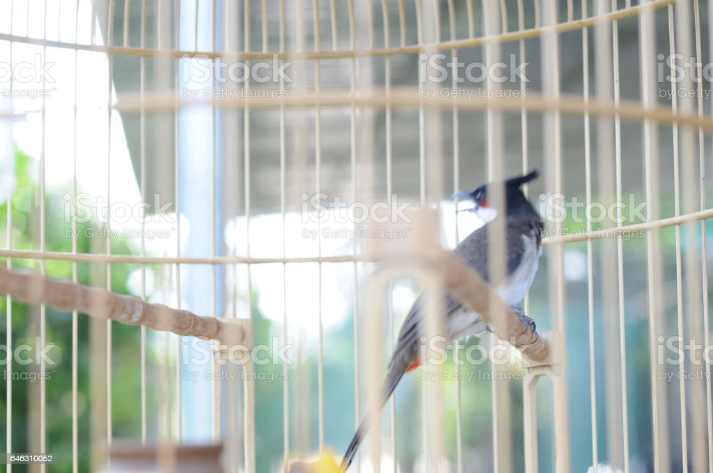 Bird in The cage. stock photo