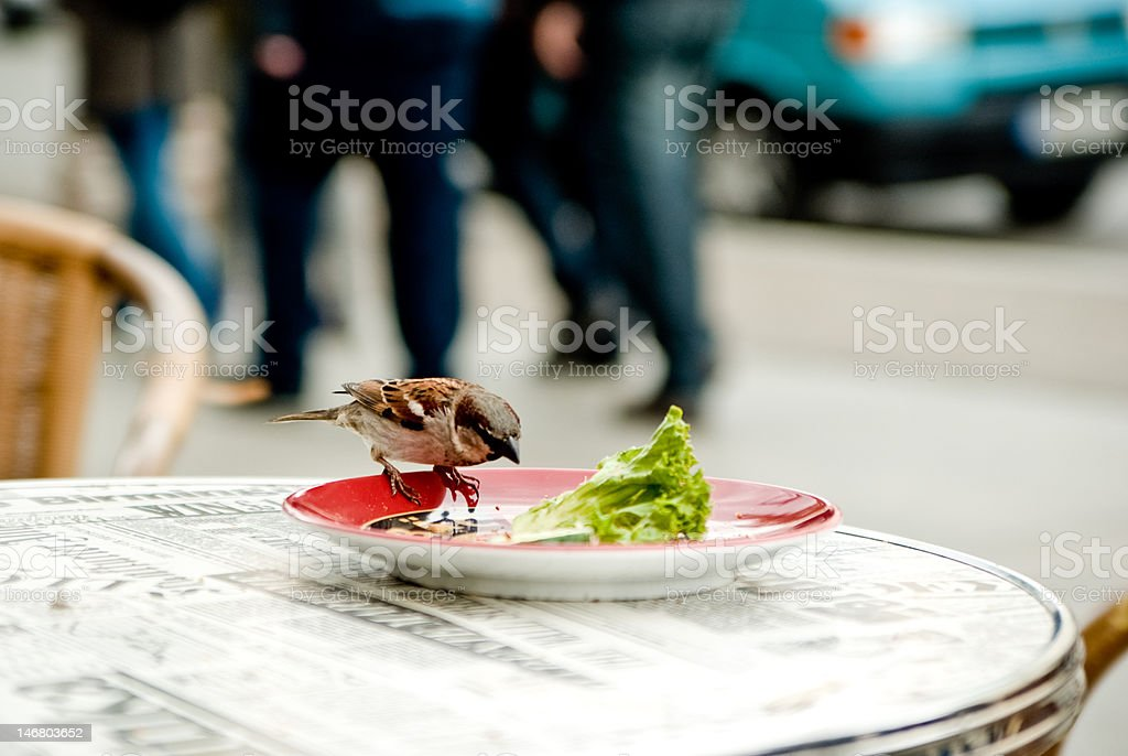 Bird in the city royalty-free stock photo