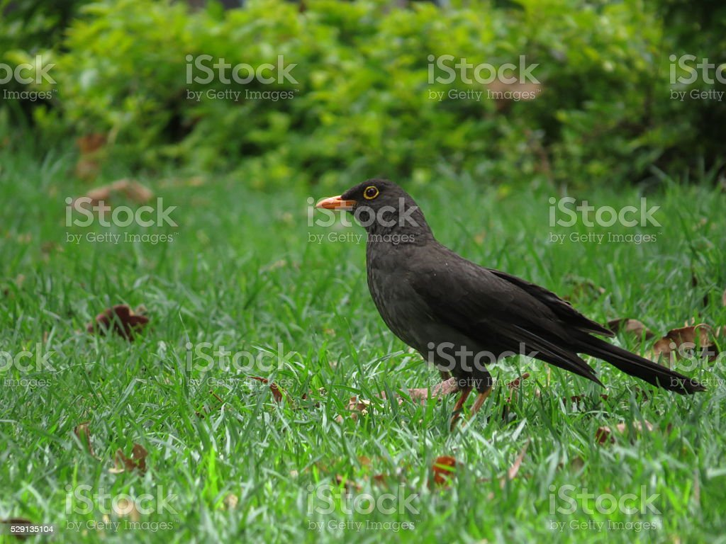 bird in the grass royalty-free stock photo