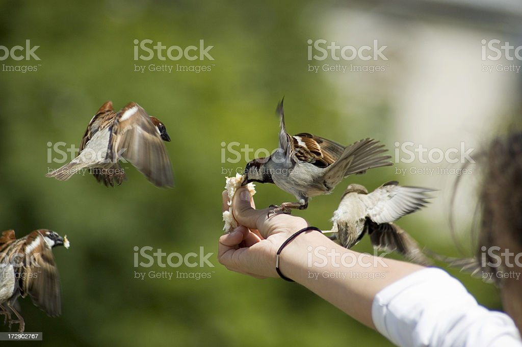bird in the hand..... royalty-free stock photo