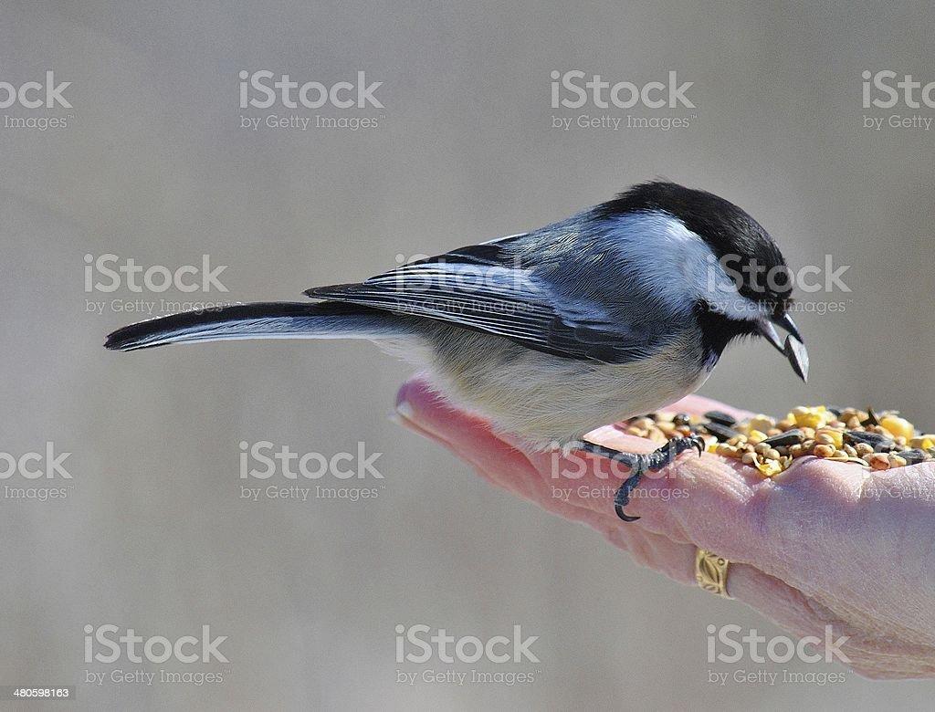 Bird In The Hand ... stock photo